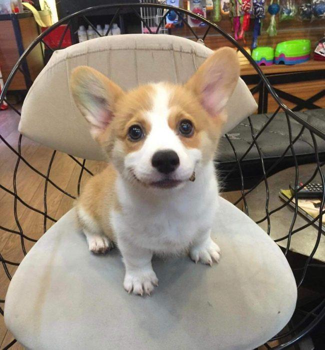 perrito con ligera sonrisa