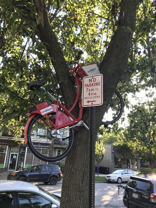 bicicleta sobre árbol