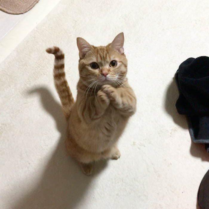 gatito suplicando