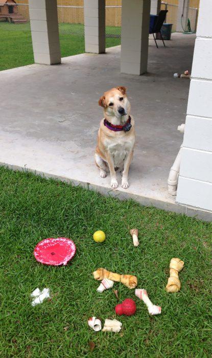 perrito se robó los juguetes del perrito vecino
