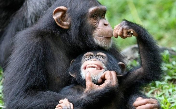 mamá y bebé chimpancés