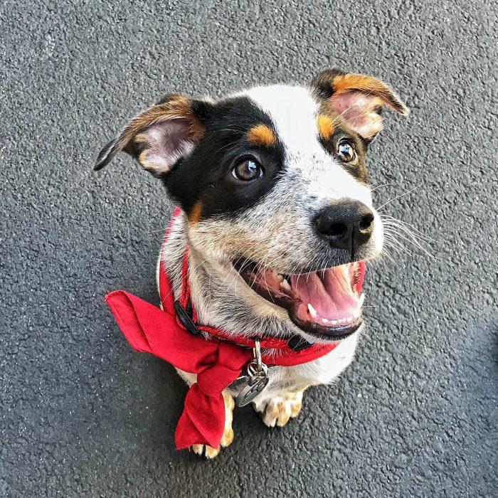 perrito con pañoleta roja