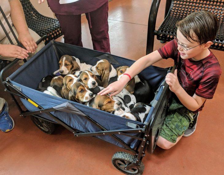 vagón lleno de cachorros