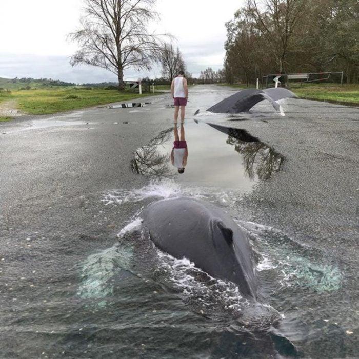 imagen surrealista de ballena en carretera