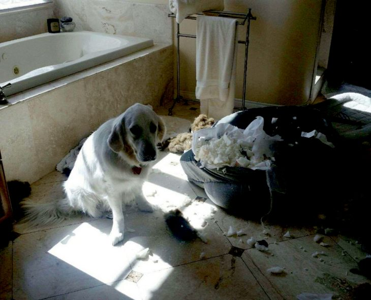 perrito destruyó su camita
