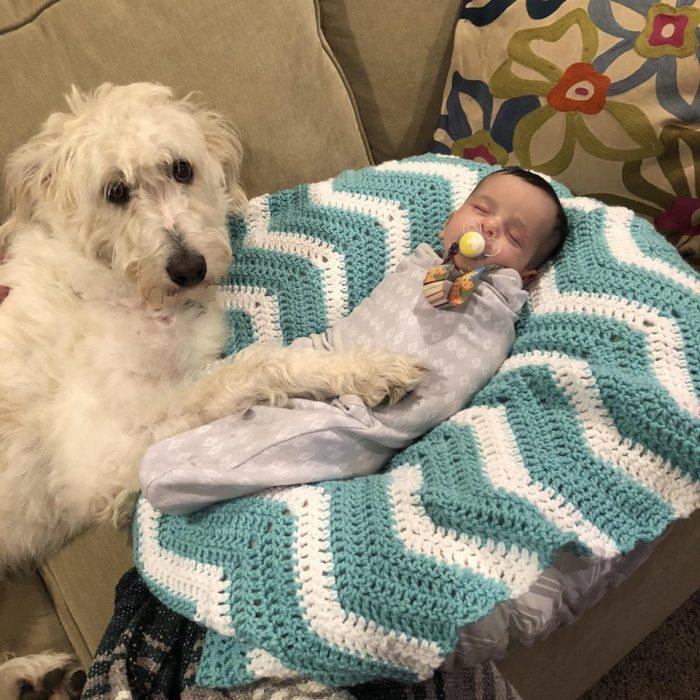perrito y bebé