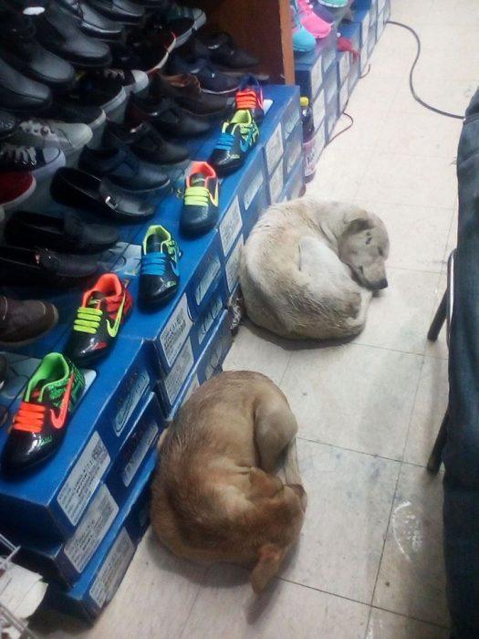 Zapatería permite que perros se resguarden de la lluvia