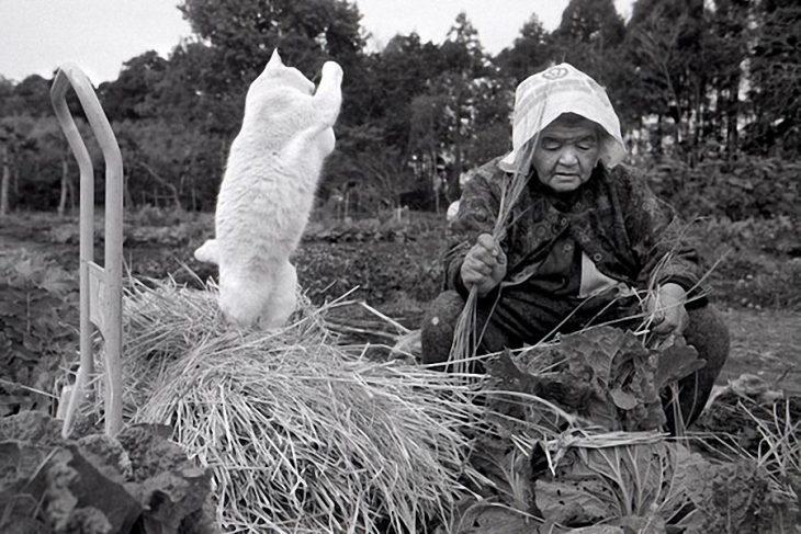 viejita y su gato