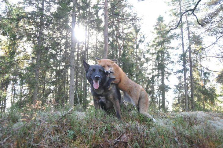 Amistades inusuales y salvajes
