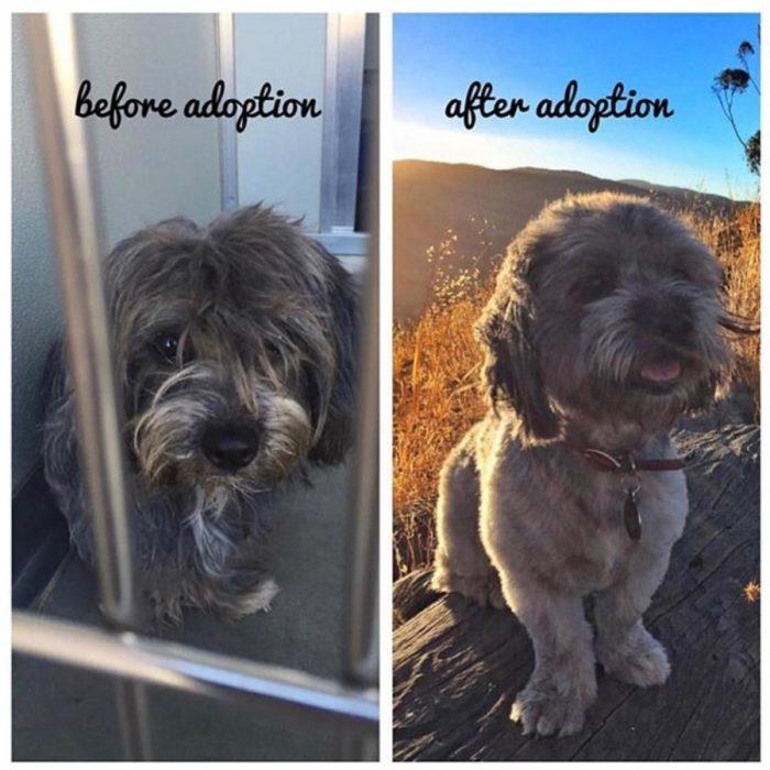 perrito triste antes de ser adoptado y feliz después de serlo