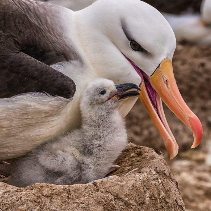 Una gaviota y su polluelo