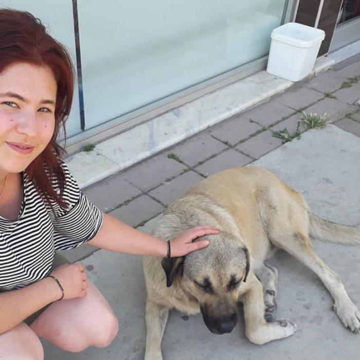 niña acaricia a un perro de la calle