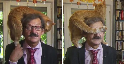 Cover Gato interrumpe entrevista en vivo de un historiador con televisora holandesa