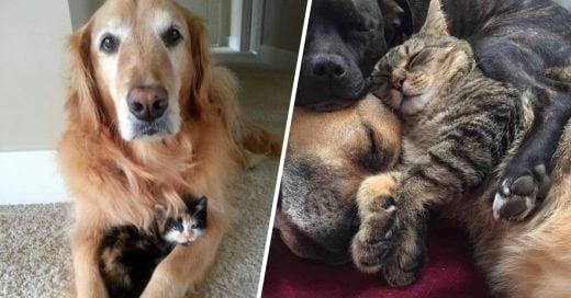 Cover Imágenes que comprueban que perros y gatos si pueden ser amigos