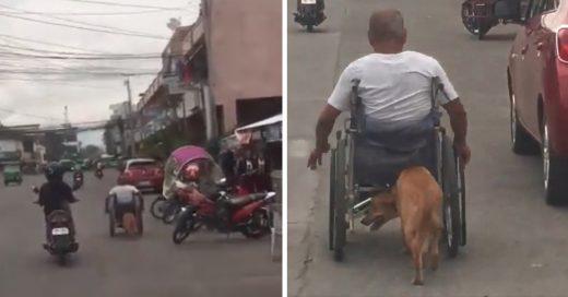 Cover Perrito empuja la silla de ruedas de su amo para llevarlo a todas partes