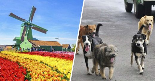 Cover Holanda es la primera región sin perros callejeros en el mundo