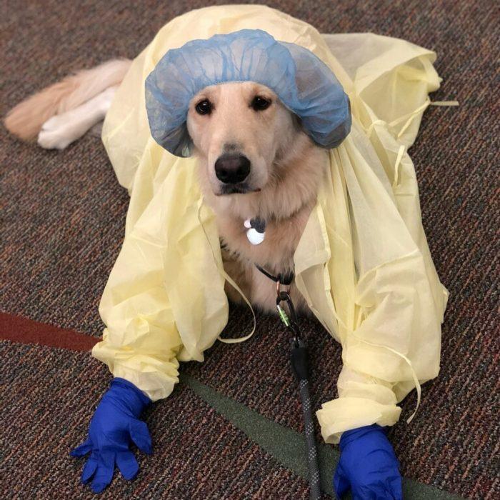 perrito vestido de doctor