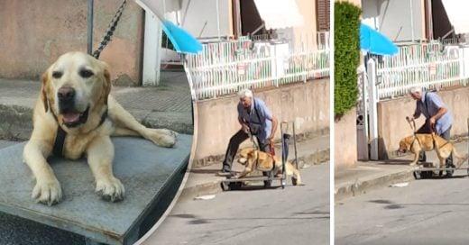Cover Un hombre pasea todos los días a su perro discapacitado en un carrito