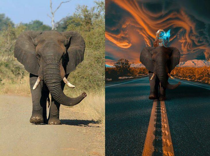 photoshop de elefante