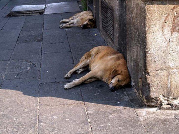 perritos callejeros recostados en la calle