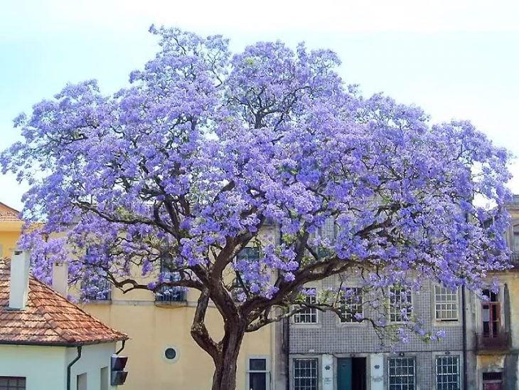 árbol floreado de kiri