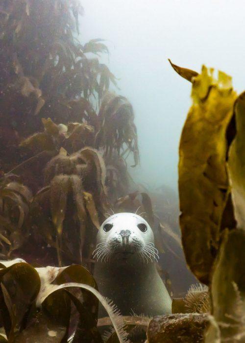 Fotografías bajo el agua ganadoras 2018 natgeo