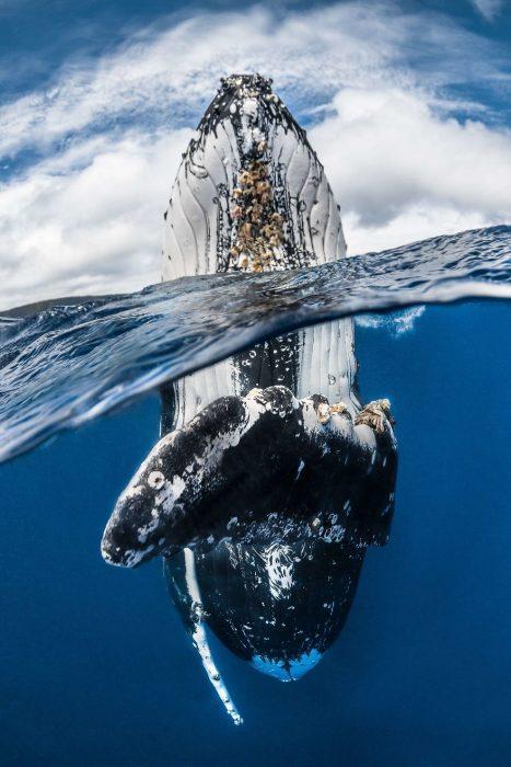 Fotografías bajo el agua 2018 natgeo