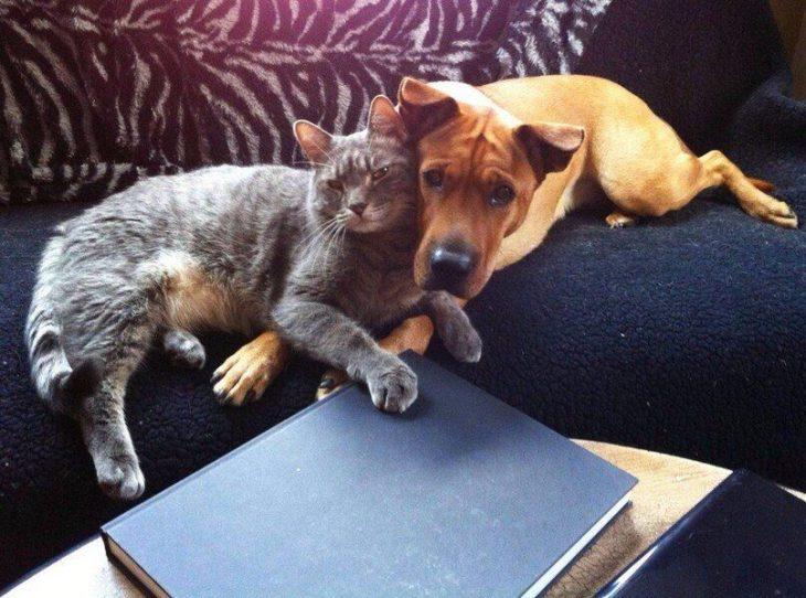 gato perro amigos