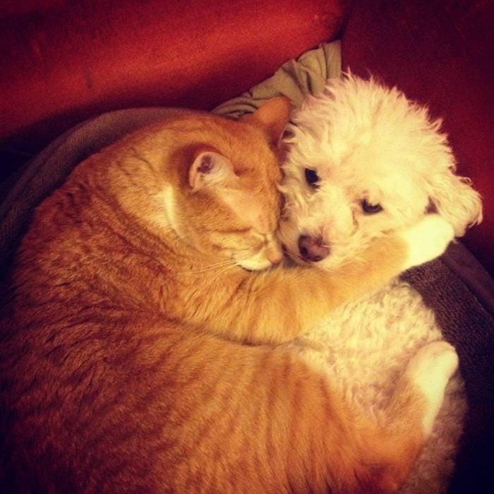 gato pero amigos
