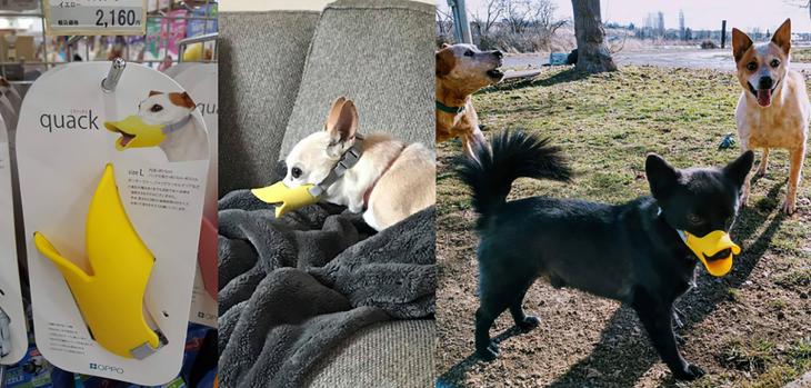 perritos con bosal de pato