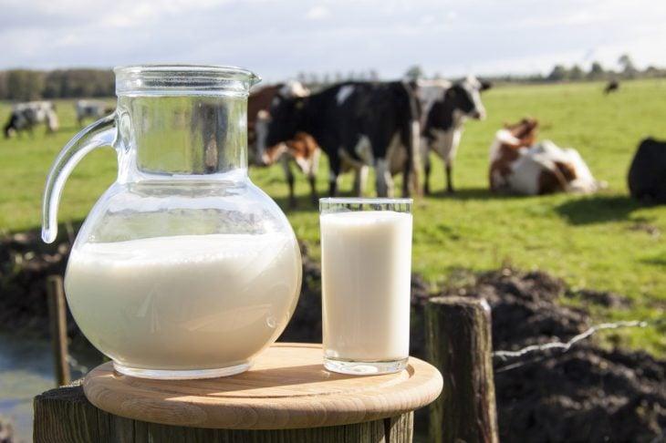lecha de vaca