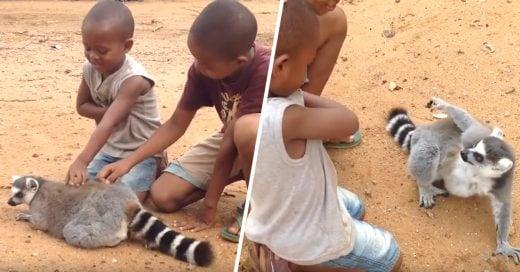 """Cover Un lémur """"exige"""" a dos niños que no dejen de acariciarlo"""