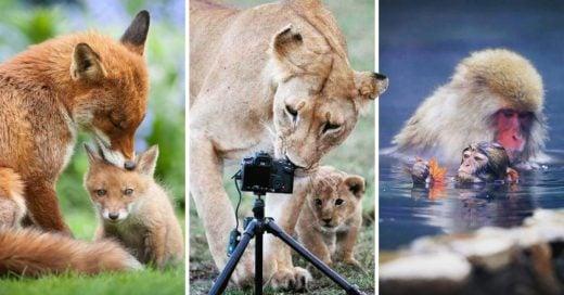 Cover fotografías de animales con sus crías