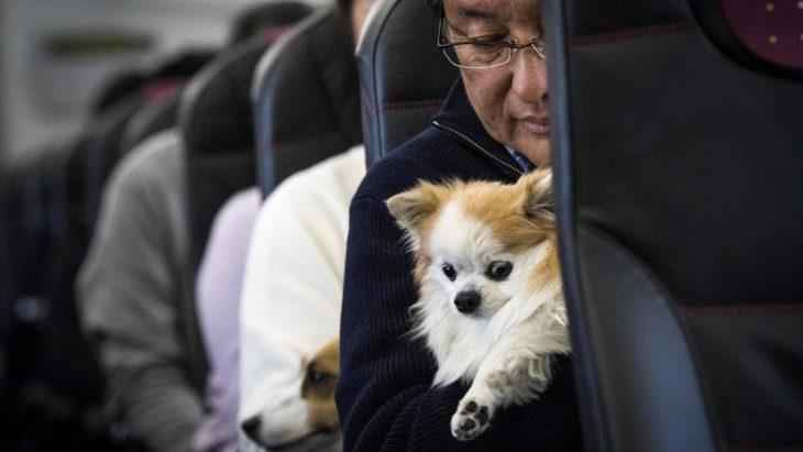 perrito con hombre en el avión