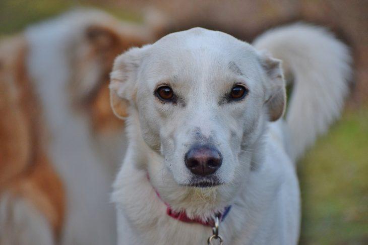 mirada triste de un perro callejero