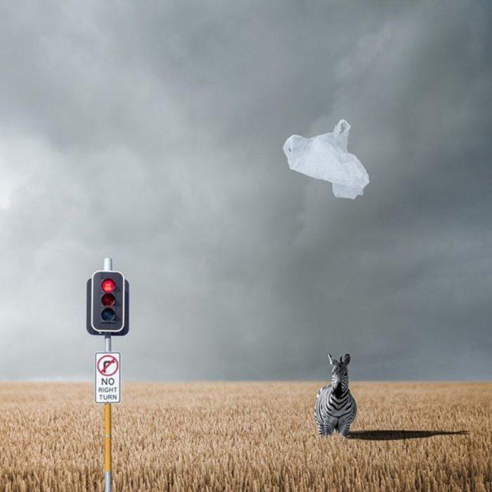 cuadro surrealista de una cebra y un semáforo