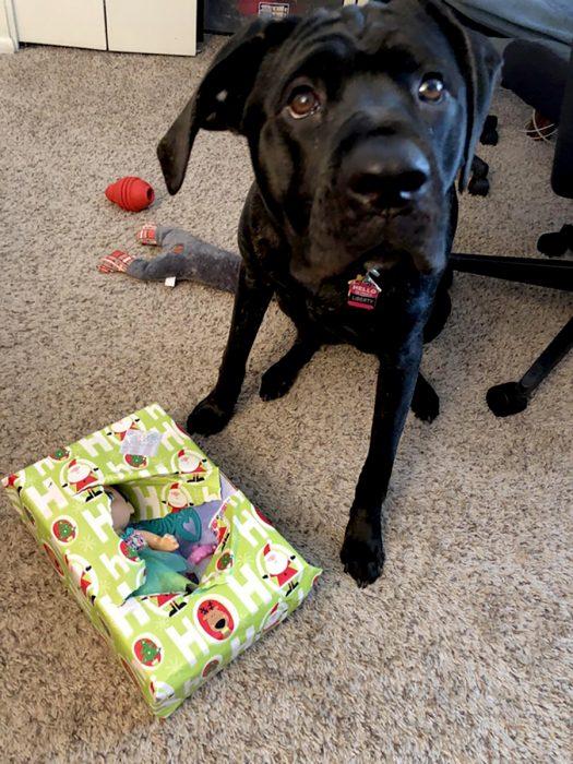 perrito destruyó un regalo