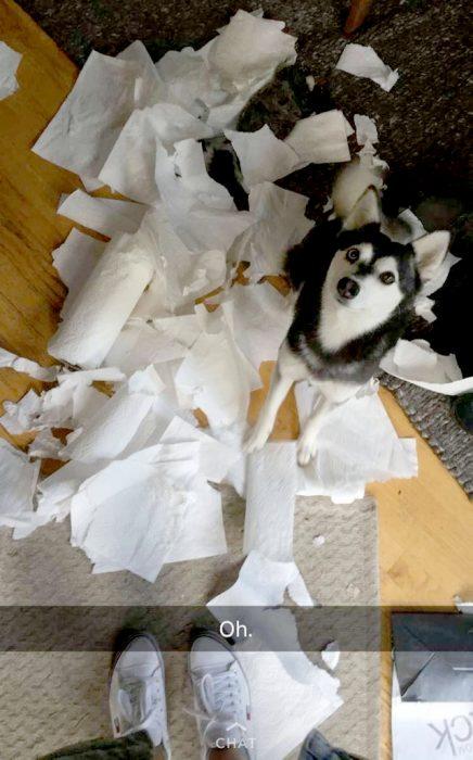 perrito hizo un desastre de papel de baño