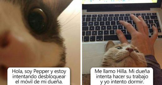 Cover Gatos malos siendo avergonzados públicamente por sus horribles crímenes