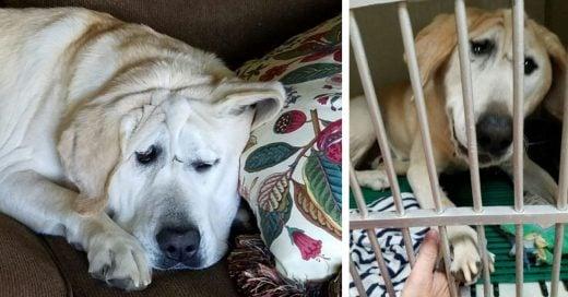 Cover Perrito fue maltratado por ser feo hasta que una mujer lo rescató
