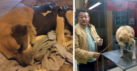 Cover Perro espera desde hace 6 meses a su familia en un aeropuerto