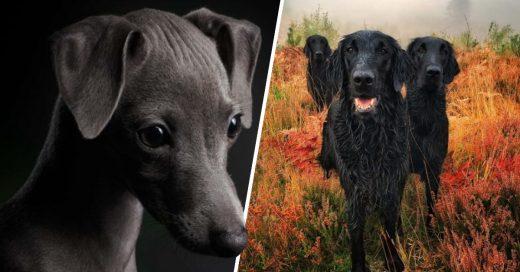 Cover Los peludos que ganaron en el concurso Fotógrafo de Perros del Año