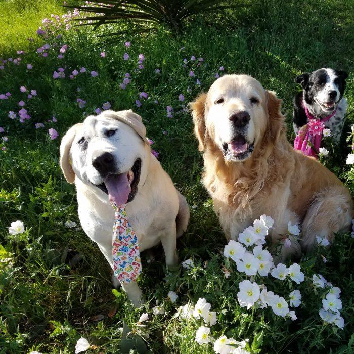 perrito cambio su vida