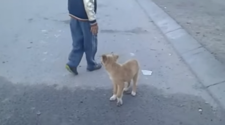 perrito seguía personas