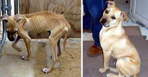 Cover conmovedores antes y después de perros rescatados