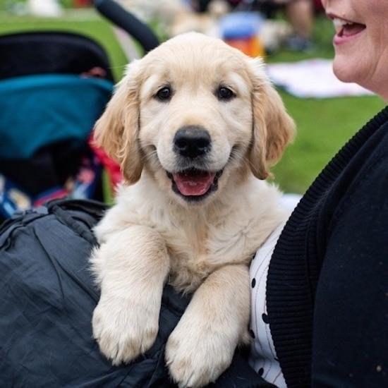 perritos hermosos