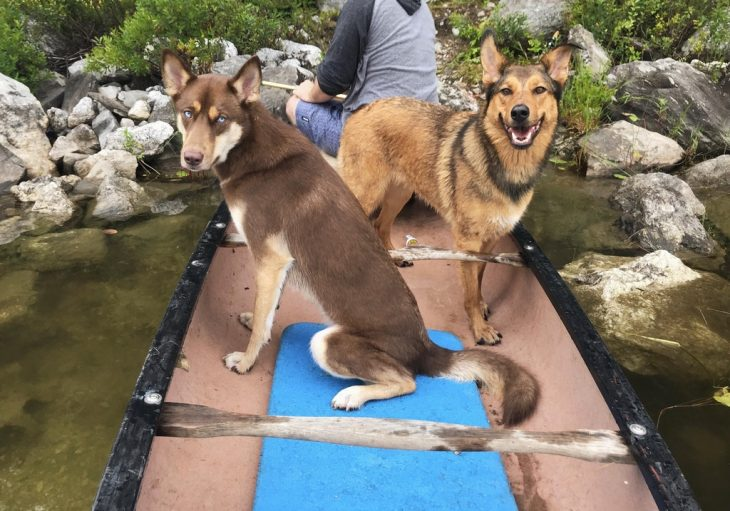 hermosos perritos