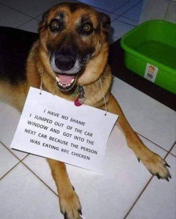 perritos pidiendo comida