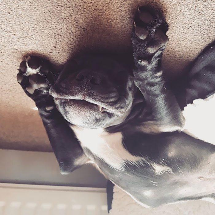 perritos que se desinflaron