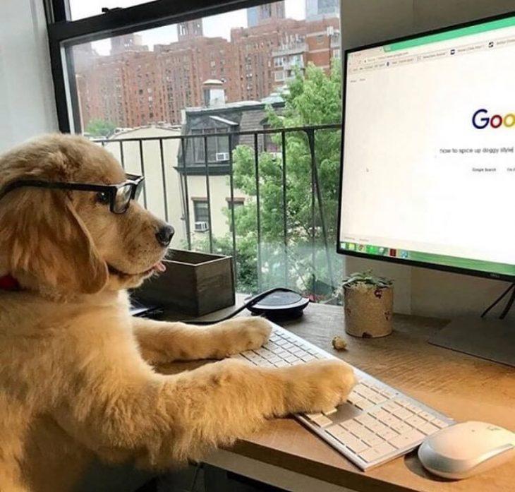 perros más productivos que tú